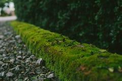 Textura velha da parede de tijolo com samambaia Imagens de Stock
