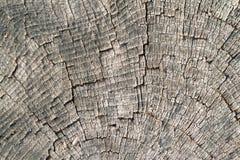Textura velha do corte da madeira Fotos de Stock
