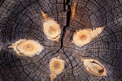 Textura velha do corte da madeira Foto de Stock