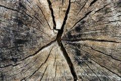 Textura velha do corte do seção transversal da árvore de Brown Imagens de Stock