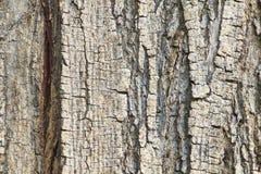 Textura velha do detalhe do tronco de árvore imagens de stock royalty free