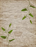 Textura velha do jornal do vintage com planta seca Foto de Stock Royalty Free