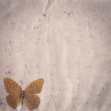 Textura velha do papel do grunge da borboleta Fotografia de Stock