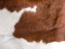 Textura verdadera de la piel de la vaca Imagen de archivo libre de regalías