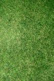 Textura verdadera del césped de la hierba imagen de archivo