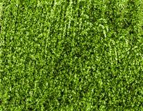 Textura verde Fotos de Stock