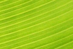 Textura verde Imágenes de archivo libres de regalías