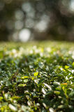 Textura verde Imagens de Stock Royalty Free