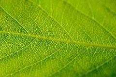 Textura verde abstracta de la hoja Foto de archivo libre de regalías