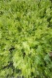 Textura verde abstrata Foto de Stock
