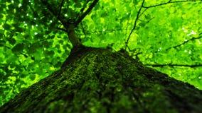 Textura verde da árvore Fotos de Stock Royalty Free