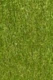 Textura verde de la corteza Imagen de archivo