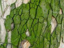 Textura verde de la corteza Imagenes de archivo