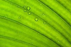 Textura verde de la hoja Imagen de archivo libre de regalías
