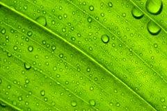 Textura verde de la hoja Foto de archivo