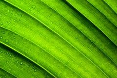 Textura verde de la hoja Fotografía de archivo