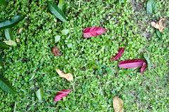 Textura verde de la hoja Imagen de archivo