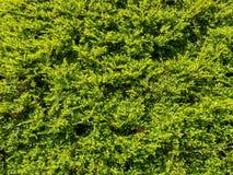 Textura verde de la hoja fotografía de archivo libre de regalías