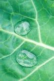 Textura verde de la hoja con gotas del agua Foto de archivo libre de regalías