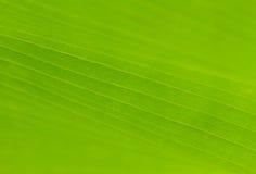Textura verde de la hoja en foco suave fotografía de archivo libre de regalías