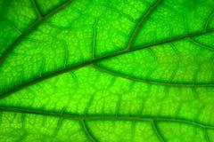 Textura verde de la hoja, fondo abstracto fotos de archivo