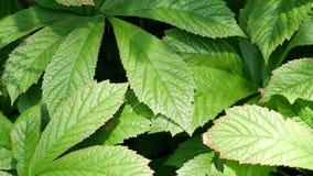 Textura verde de la hoja Fondo de la textura de la hoja metrajes