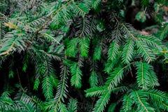Textura verde de la hoja Fondo de la textura de la hoja Modelo hermoso para la bandera con una planta verde Concepto de la natura ilustración del vector