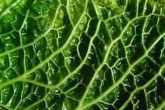 Textura verde de la naturaleza Foto de archivo libre de regalías