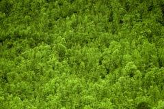 Textura verde del bosque Imágenes de archivo libres de regalías