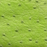 Textura verde del cuero del reptil Imagen de archivo libre de regalías