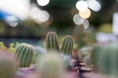Textura verde del fondo del cactus Fotos de archivo libres de regalías