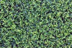 Textura verde del fondo de la hoja Imagen de archivo