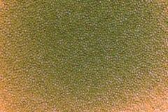 Textura verde del fractal Imágenes de archivo libres de regalías