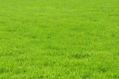 Textura verde del prado fotos de archivo