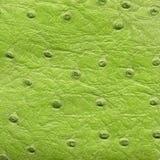 Textura verde do couro do réptil Imagem de Stock Royalty Free