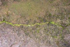 Textura verde do fundo do musgo bonita na natureza fotos de stock royalty free