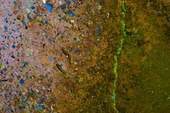 Textura verde do fundo do musgo bonita na natureza foto de stock