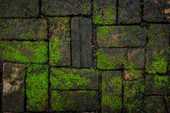 Textura verde do fundo do musgo e do tijolo bonita na natureza Pavimenta o teste padrão no conceito do ambiente fotos de stock royalty free