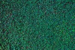 Textura verde do fundo, árvore da folha da natureza Fotos de Stock Royalty Free