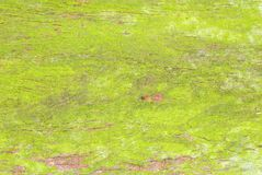 Textura verde do tronco de árvore do musgo Fotos de Stock Royalty Free