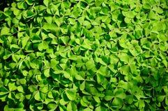 Textura verde natural da folha Fotos de Stock