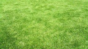 Textura verde natural do fundo Fotos de Stock