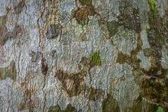 Textura verde velha da superfície da madeira do preto de Brown Imagens de Stock