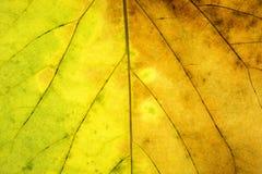 Textura verde y amarilla abstracta de la hoja para el fondo Imágenes de archivo libres de regalías