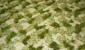 Textura verde y amarillenta en alfombra Imágenes de archivo libres de regalías