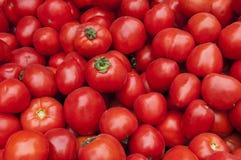 Textura vermelha da colheita de tomate Fotos de Stock