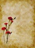 Textura vermelha dos cravos Foto de Stock