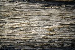 Textura very old wood, texture and color. Textura very old wood, texture and color royalty free stock image