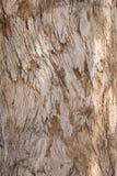 Textura Wornout da árvore Fotografia de Stock Royalty Free