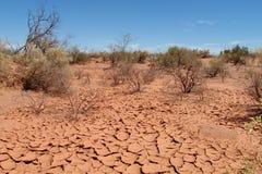 Textura y arbustos del suelo seco del desierto en ella Fotografía de archivo